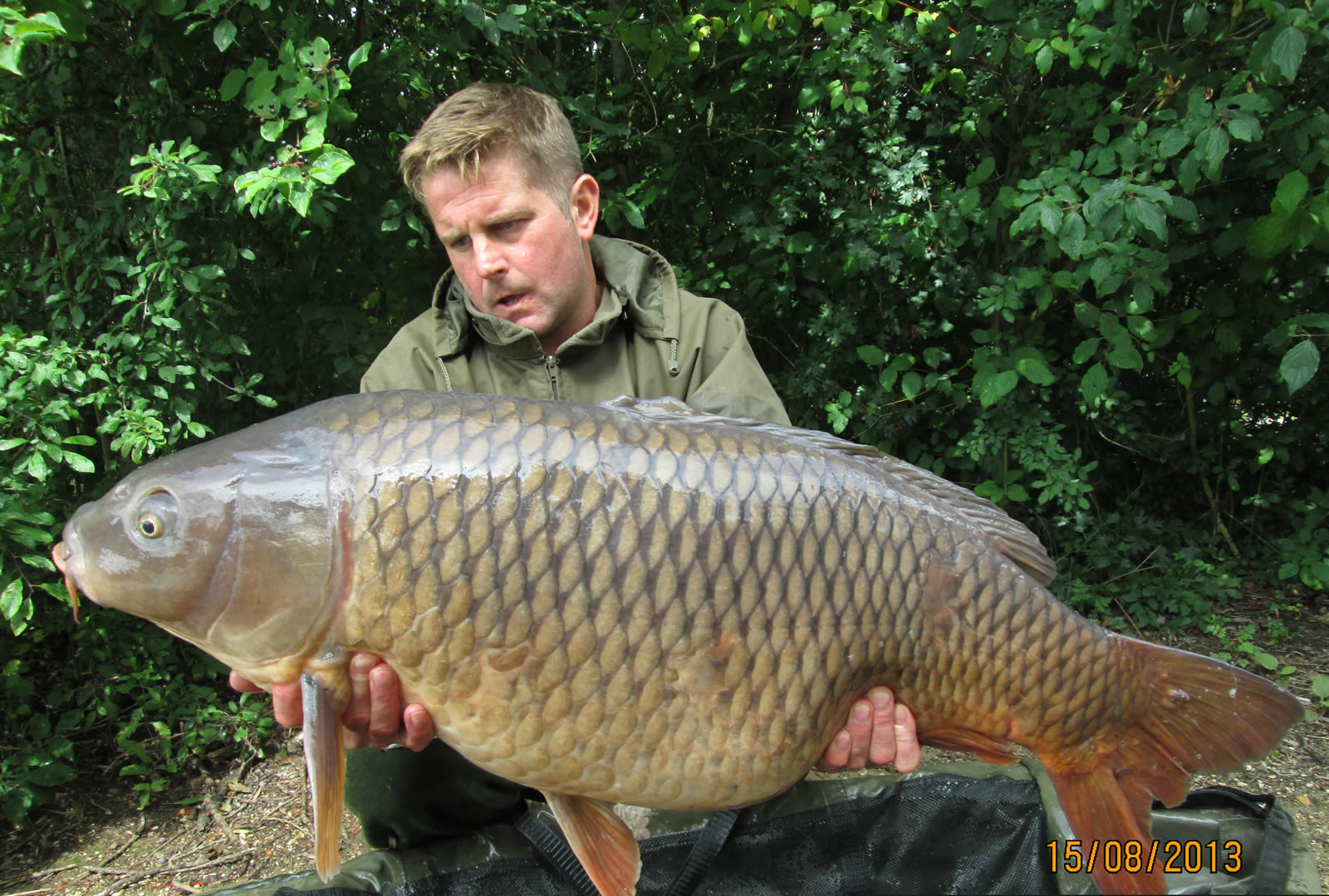 Simon 40.03 Common Carp from the Piont