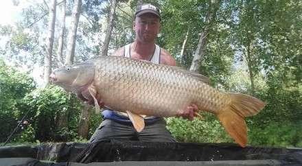 Common Carp August 2015 Long Lake Les Quis